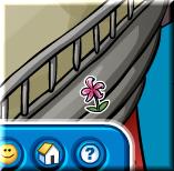 lily-pin1